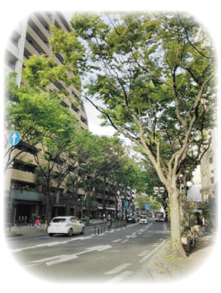 1405_keyaki01