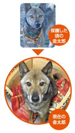 1403_金太郎